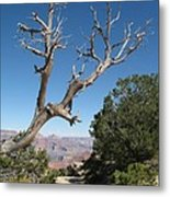 Dead Tree At Grand Canyon South Rim Metal Print