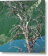Dead Tree At Green River Lakes -wyoming Metal Print