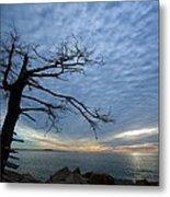 Dead Tree At Otter Cliffs Metal Print