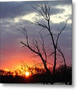 Dead Tree At Sunset Metal Print