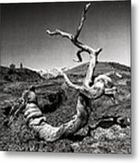 Dead Tree Craters Of The Moon Id Metal Print