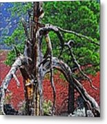 Dead Tree On Cinder At Sunset Crater Metal Print