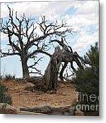 Dead Tree - Natural Bridges National Park Metal Print