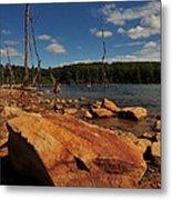 Dead Trees And Rocks Metal Print