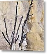 Dead Trees At Mammoth Metal Print