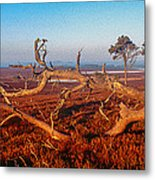 Dead Trees, Southern Uplands Metal Print