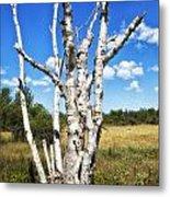 Dead Trees Metal Print