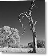 Dead Weathered Metal Print