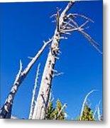 Dead White Trees Metal Print
