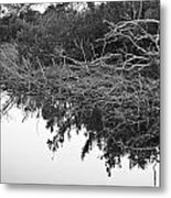Deadfall Reflection In Black And White Metal Print