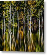 Deadwood Metal Print