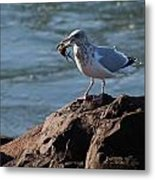 Death By Seagull Metal Print
