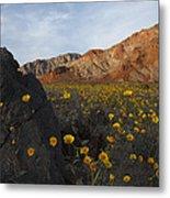 Death Valley Spring 1 Metal Print