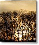 December Forest Dusk Metal Print