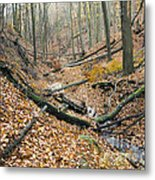 Deciduous Forest With Ravines Metal Print