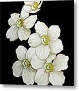 Decorative White Floral Flowers Art Original Chic Painting Madart Studios Metal Print