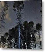 Deep Forest At Night Metal Print