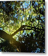 Deep Forest Light Metal Print