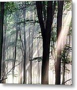 Deep Forest Morning Light Metal Print