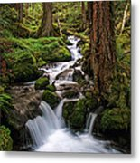 Deep In The Forest Metal Print by Pamela Winders