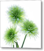 Deep In The Roots All Flowers Keep The Light Metal Print