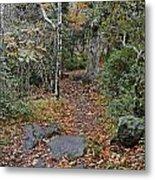 Deep In The Woods Metal Print by Susan Leggett