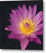 Deep Pink And Yellow... Metal Print