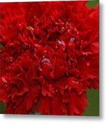 Deep Red Carnation 2 Metal Print