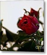 Deep Red Roses Metal Print