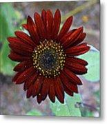 Deep Red Sunflower Metal Print