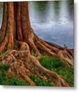 Deep Roots - Tree On North Carolina Lake Metal Print by Dan Carmichael