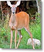 Deer 102 Metal Print