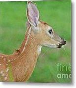 Deer 14 Metal Print