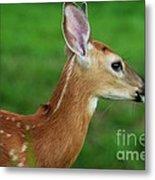 Deer 16 Metal Print