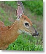 Deer 17 Metal Print