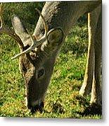 Deer 2009 Metal Print