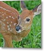 Deer 21 Metal Print