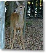 Deer 3 Metal Print