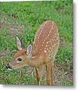 Deer 7 Metal Print