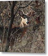 Deer Ahead Metal Print