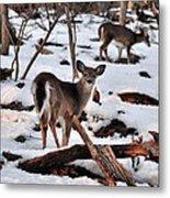 Deer And Snow Metal Print
