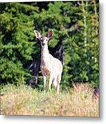Deer Approaching Metal Print