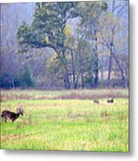 Deer At Cades Cove Metal Print