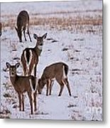 Deer At Dusk Metal Print