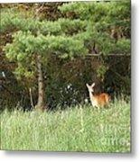 Deer At Dusk V1 Metal Print