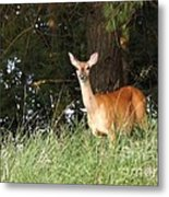 Deer At Dusk V3 Metal Print