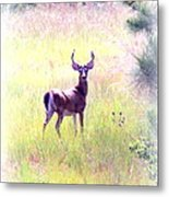 Deer - Buck - White-tailed Metal Print