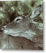 Deer Close-up Metal Print