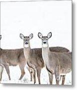 Deer Deer Deer Metal Print