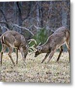 Deer Discussion E167 Metal Print